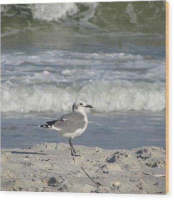 Seagulls At Fernandina 6 Wood Print