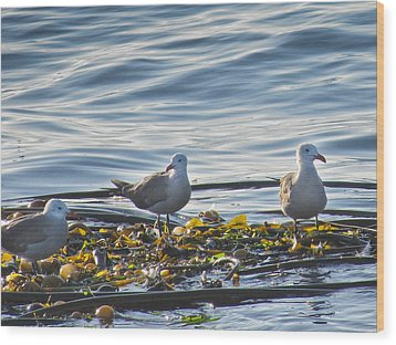 Seagulls In Victoria Bc Wood Print