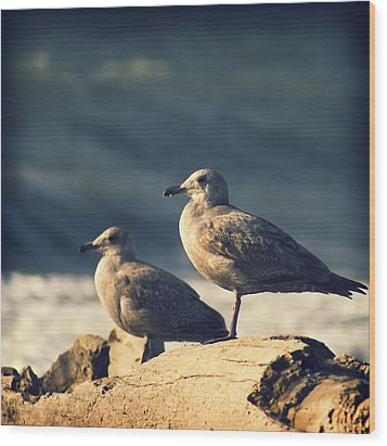Wood Print featuring the photograph Seagulls On A Beach by Yulia Kazansky