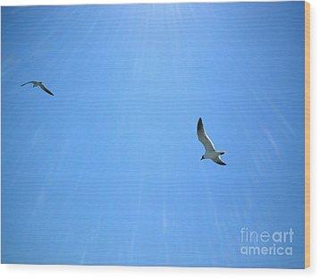 Seagulls Soar Wood Print