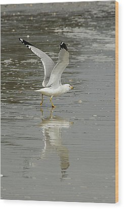 Seagulls Takeoff Wood Print by Kathy Gibbons