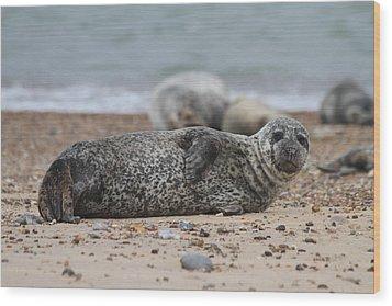 Seal Pup On Beach Wood Print by Gordon Auld