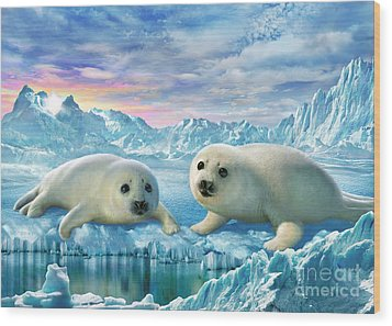 Seal Pups Wood Print by Adrian Chesterman
