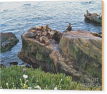 Seals And Pups Wood Print by Bedros Awak