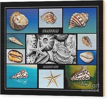 Seashell Collection Wood Print by Kaye Menner