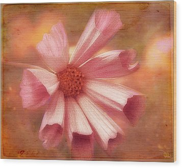 Seashell Cosmos Wood Print