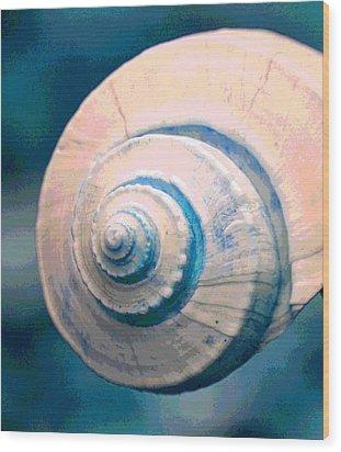 Seashell In Pastel Wood Print