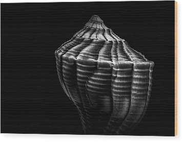 Seashell On Black Wood Print by Bob Orsillo
