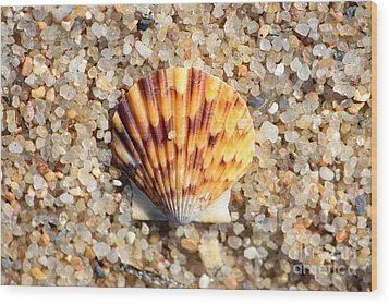 Seashell On Sandy Beach Wood Print by Carol Groenen