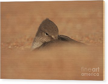 Wood Print featuring the photograph Seashell Solitude by John F Tsumas