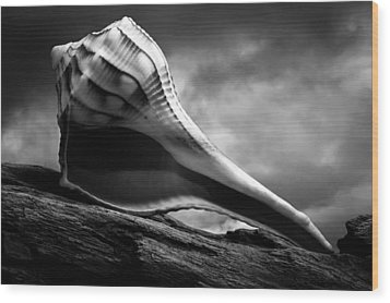 Seashell Without The Sea 3 Wood Print by Bob Orsillo