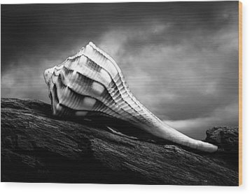 Seashell Without The Sea Wood Print by Bob Orsillo