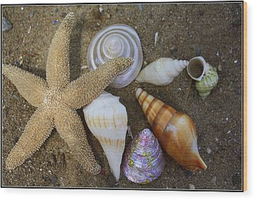 Seashells And Star Fish Wood Print by Dora Sofia Caputo Photographic Art and Design