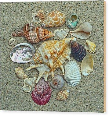 Seashells Collection Wood Print by Sandi OReilly