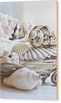 Seashells Wood Print by Elena Elisseeva