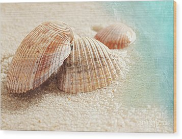 Seashells In The Wet Sand Wood Print by Sandra Cunningham