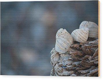 Seashells On Driftwood  Wood Print by Brian Boudreau