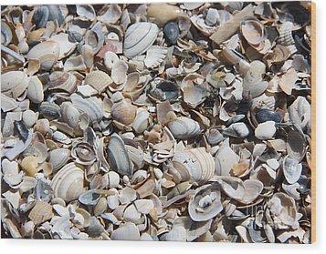 Seashells On The Beach Wood Print