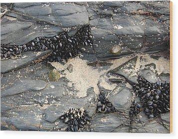 Seashells On The Seashore Wood Print by Elijah  Montecelli