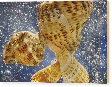 Wood Print featuring the photograph Seashells by Paula Brown