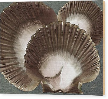 Seashells Spectacular No 22 Wood Print by Ben and Raisa Gertsberg