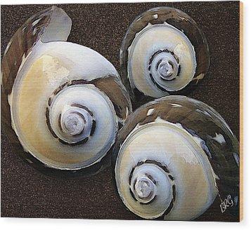 Seashells Spectacular No 23 Wood Print