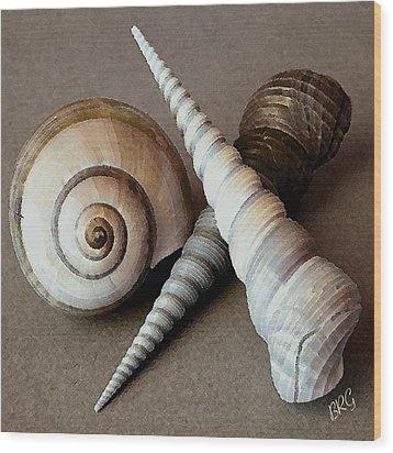 Seashells Spectacular No 24 Wood Print