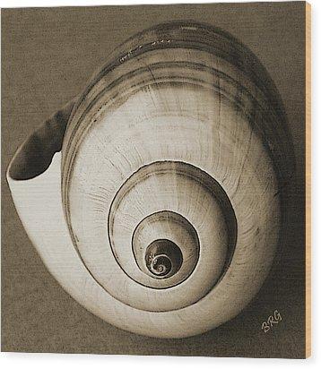 Seashells Spectacular No 25 Wood Print by Ben and Raisa Gertsberg