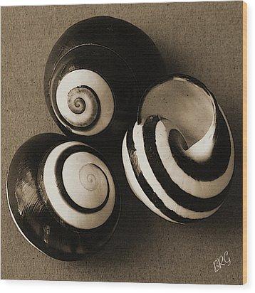 Seashells Spectacular No 27 Wood Print by Ben and Raisa Gertsberg