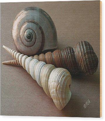 Seashells Spectacular No 29  Wood Print