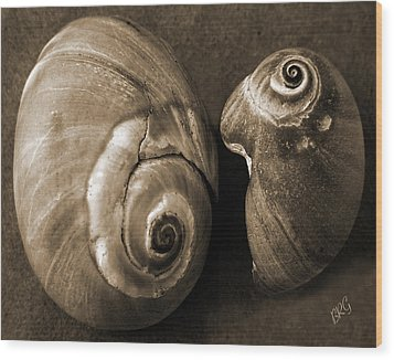 Seashells Spectacular No 6 Wood Print by Ben and Raisa Gertsberg