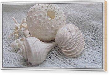 Seashells Study 1 Wood Print by Danielle  Parent