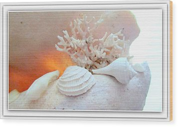 Seashells Study 3 Wood Print