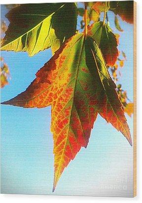 Season's Change Wood Print by James Aiken