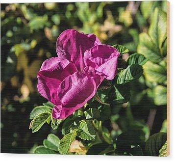 Seasons Last Rose Wood Print by Leif Sohlman
