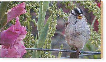 Seattle Bird Wood Print
