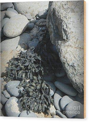Seaweed And Rocks  Wood Print
