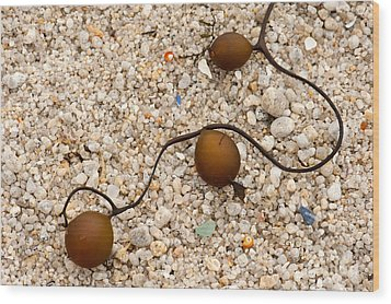 Seaweed And Sand - Jewels Of The Ocean Wood Print by Artist and Photographer Laura Wrede