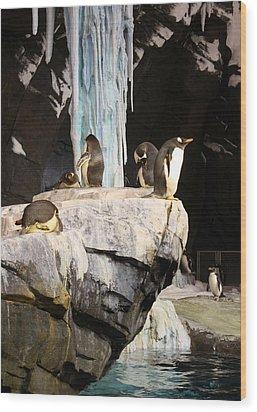 Seaworld Penguins Wood Print