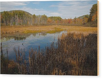 Secluded Adirondack Pond Wood Print by David Patterson