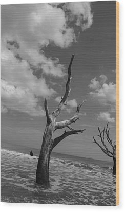 Second Glance Wood Print by Steven  Taylor