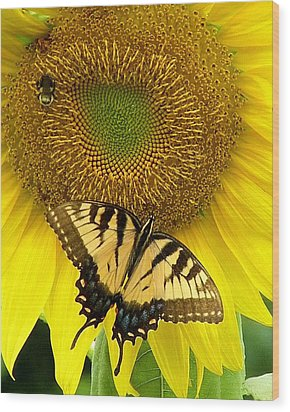 Secret Lives Of Sunflowers Wood Print