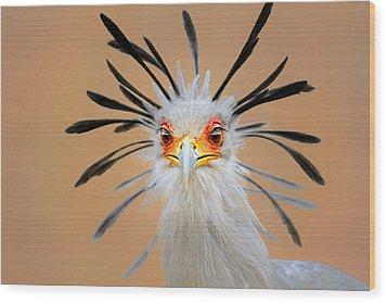 Secretary Bird Portrait Close-up Head Shot Wood Print