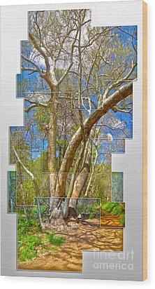 Sedona Arizona Big Tree Wood Print by Gregory Dyer