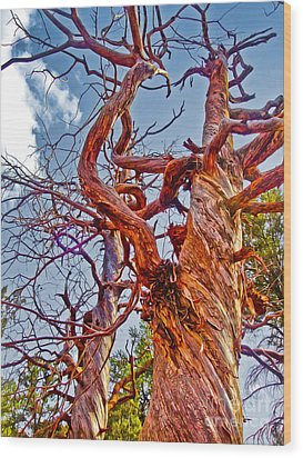 Sedona Arizona Ghost Tree Wood Print by Gregory Dyer