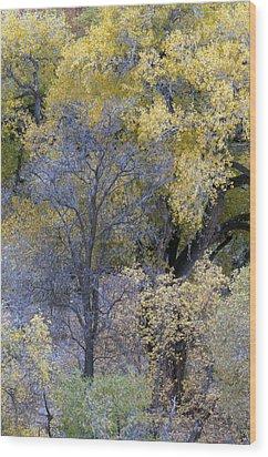 Sedona Fall Color Wood Print