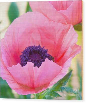 Seductive Poppy Wood Print by Roselynne Broussard