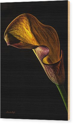 Seductress Wood Print by Karen Slagle