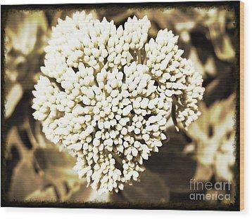 Sedum In The Heart Wood Print by Kimberlee Baxter