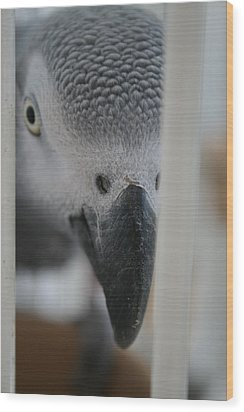 I See You Wood Print by Paulette Maffucci
